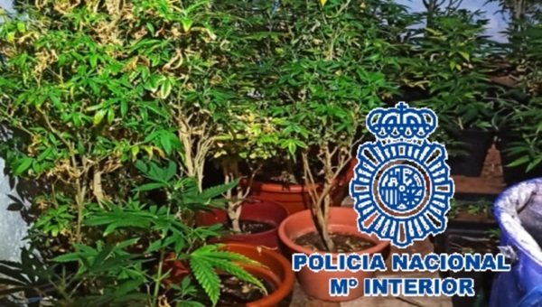 policia marihuana